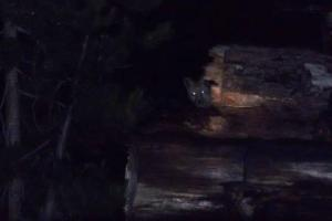If you can't tell what this is, look very closely.  It's one of the foxes.  Kelly got this shot on the last night.